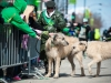 2-wolfhounds-2014